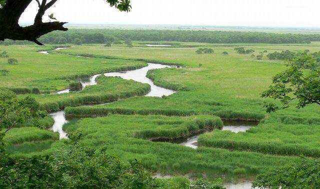 釧路湿原を楽しむ!釧路川カヌーやトレッキングなど釧路観光で大自然を満喫するならレラへ